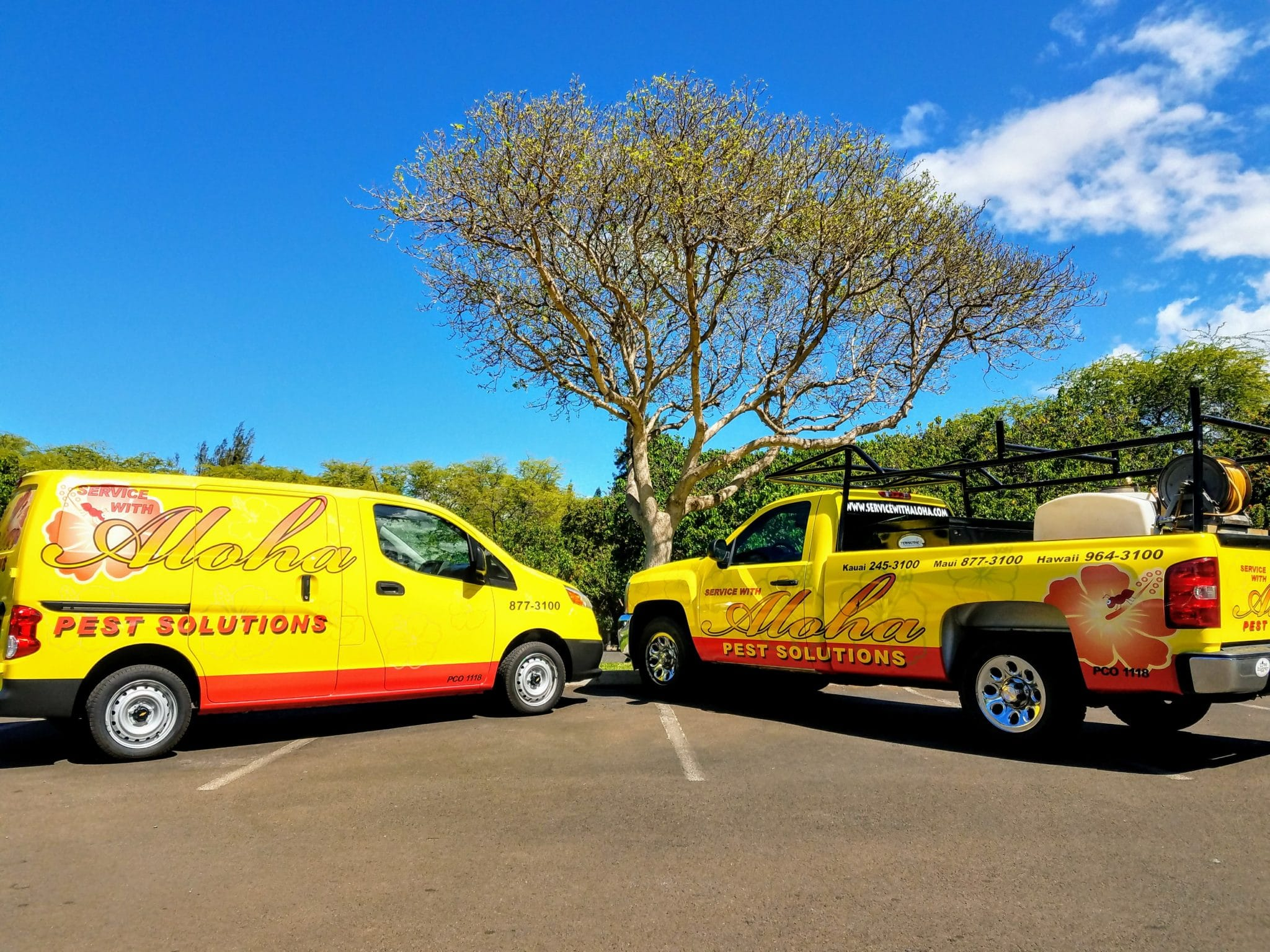 Hawaii's best termite and pest control
